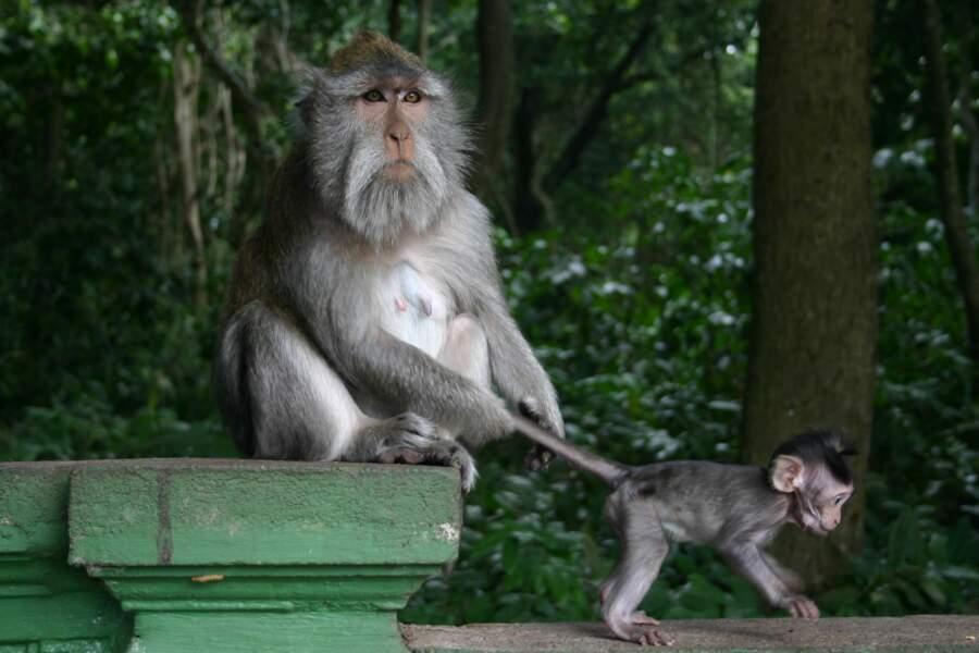 Le sanctuaire naturel de la forêt des singes