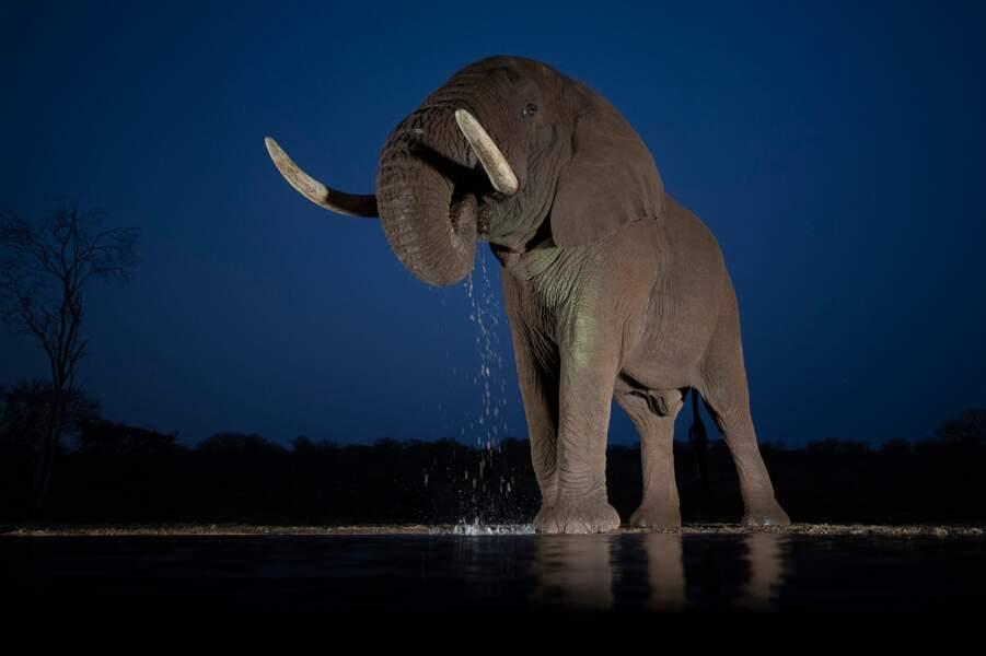 Eléphant d'Afrique par Jérôme Guillaumot