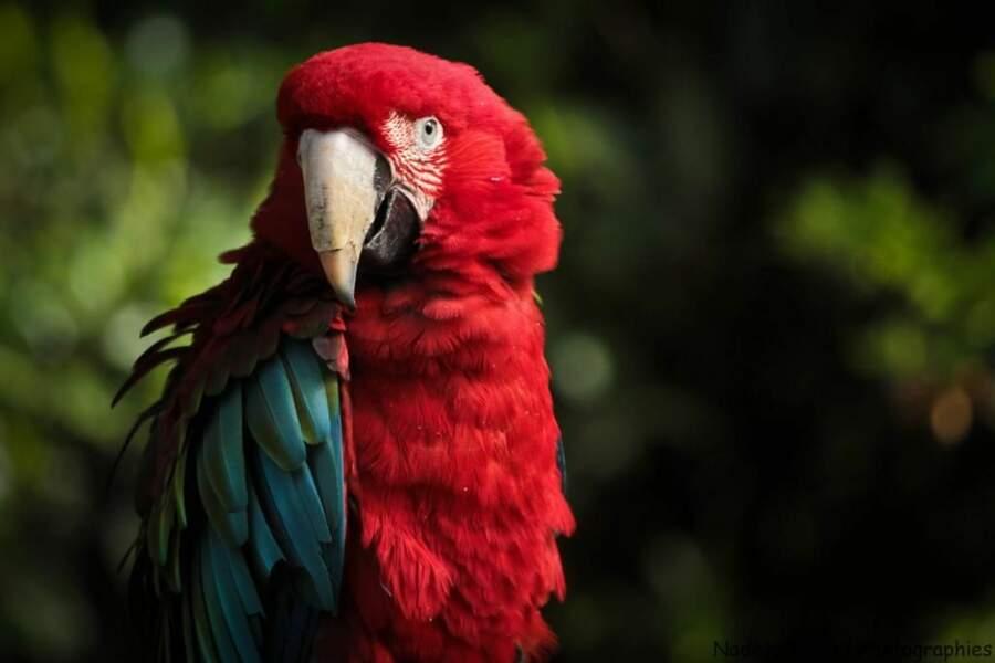 Photo prise au zoo d'Amnéville (Lorraine) par le GEOnaute : absinth.