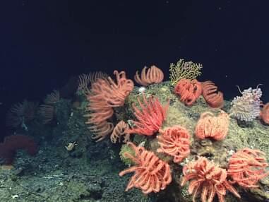 Fascinantes créatures en eaux profondes