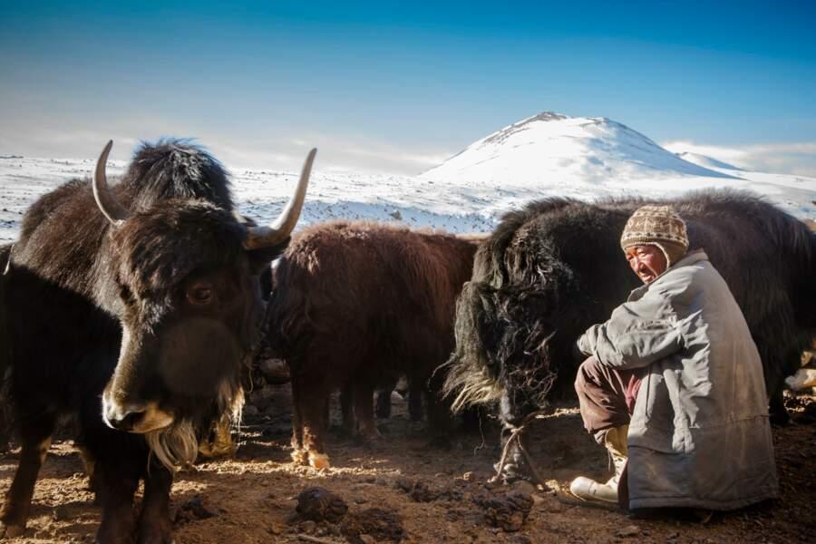 Eleveur de yaks