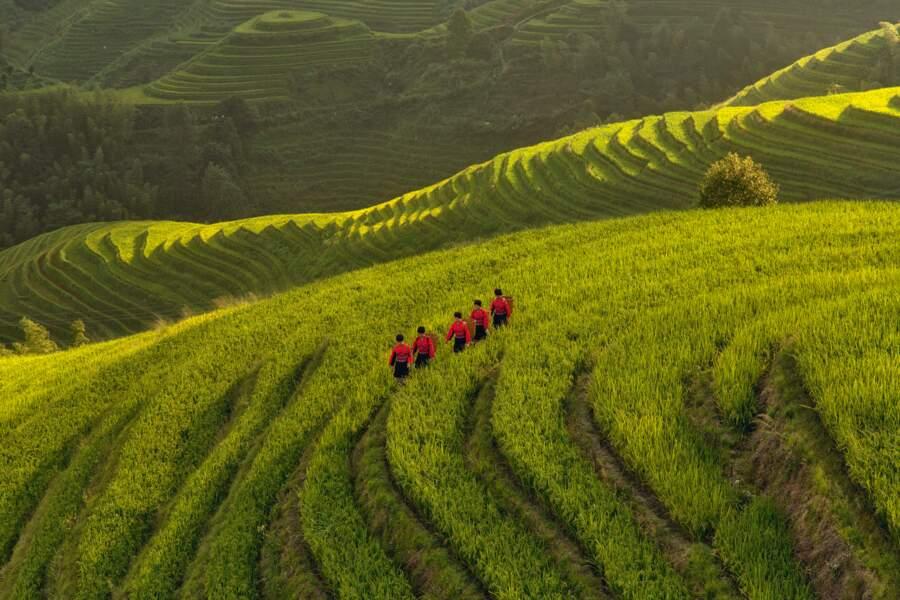 Rizières en terrasses de Longji, Chine : procession sur l'échine du dragon