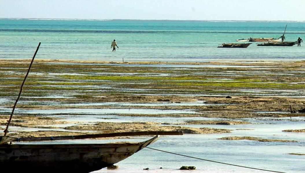 Photo prise à Zanzibar, par masoa