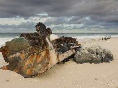 L'atoll de Clipperton, cette poussière de France au milieu de nulle part