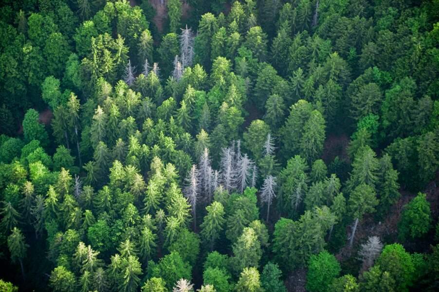Forêts et cultures menacées par de nouvelles maladies