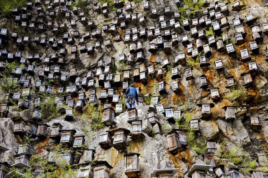 Mont Guanmen, Chine : un miel délicieux, mais qui se mérite