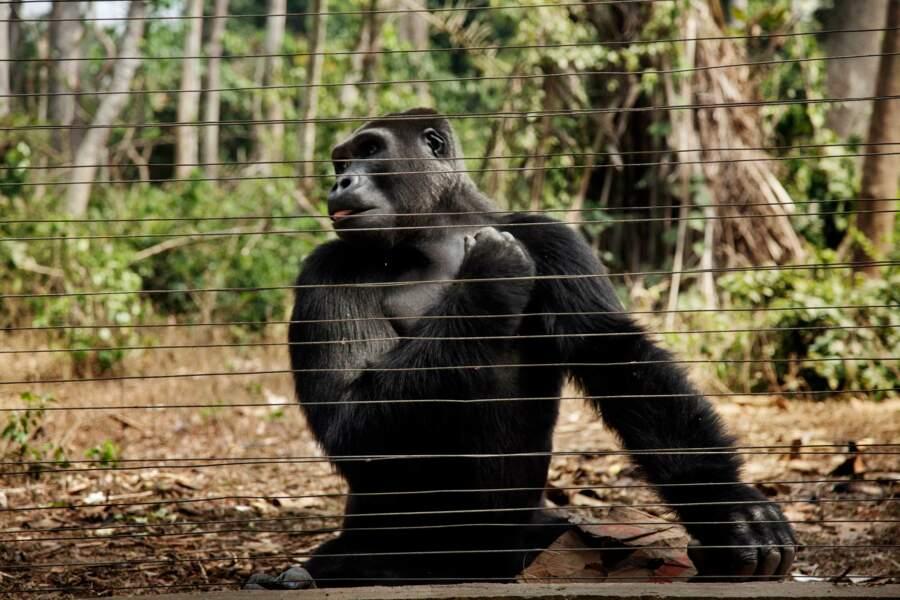 Un centre de réhabilitation pour les primates