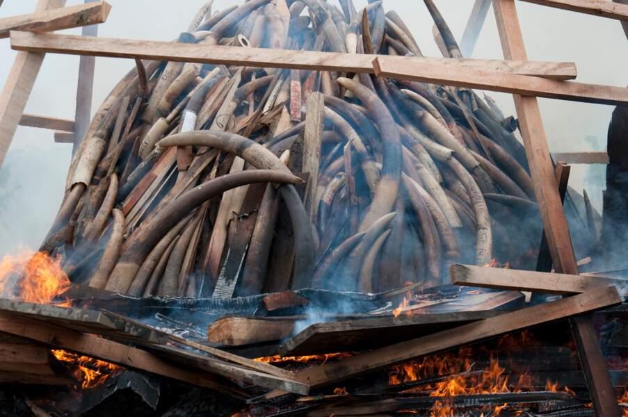 Engagement contre le commerce de l'ivoire