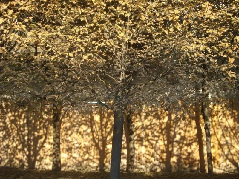 Photo prise dans les jardins du Palais Royal de Paris par le GEOnaute : karminhaka
