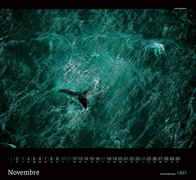 Baleine au large de la péninsule de Valdés – Argentine