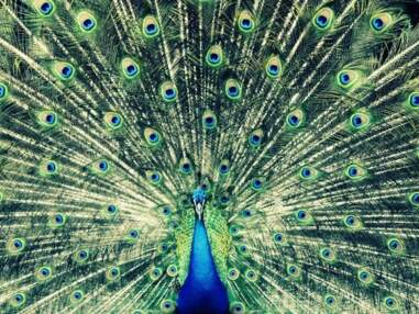 Concours Photo Animaux - Notre première sélection (du 16 au 23 novembre 2012)