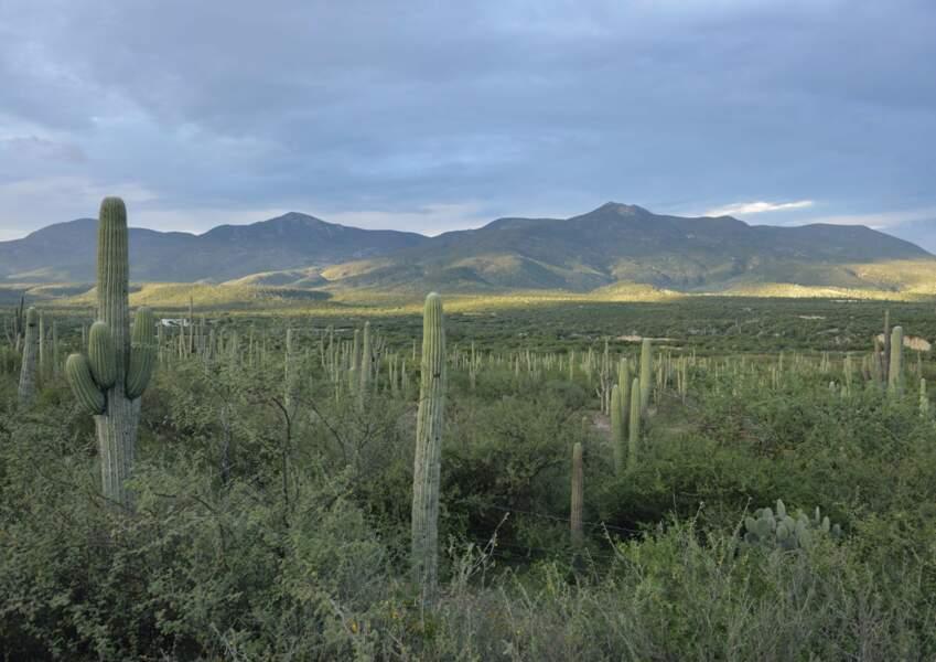La vallée de Tehuacán-Cuicatalán, au Mexique