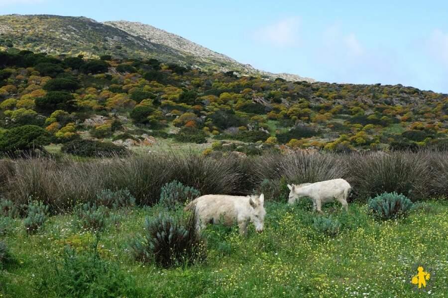 Sardaigne - Safari sur l'île des ânes albinos
