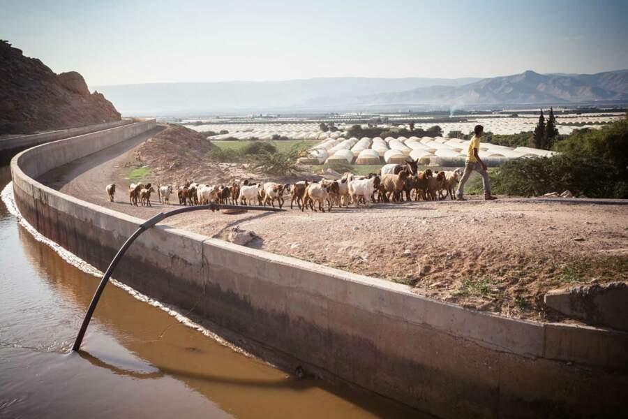 Au sud, la Jordanie pompe des quantités phénoménales pour irriguer ses serres