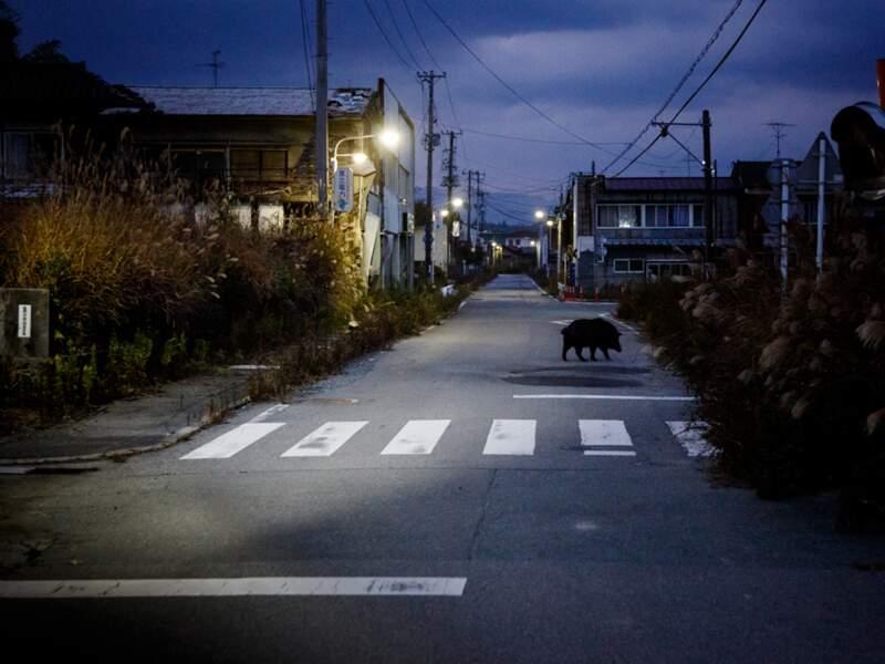 À Tomioka, les lampadaires projettent le spectacle de rues aux habitations fracassées