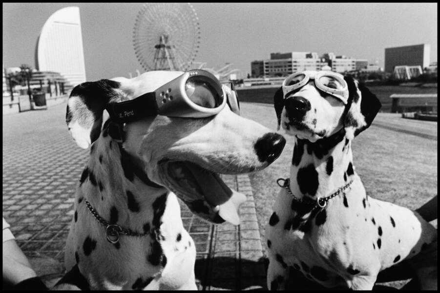 Chiens-chiens, Yokohama, Japon, 2003