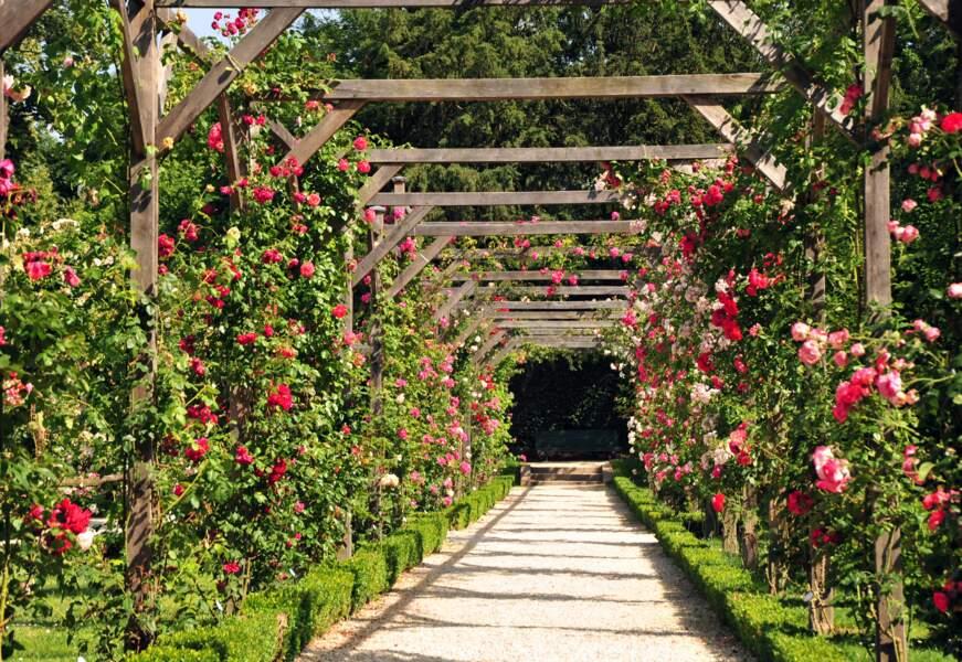 La roseraie du parc de Bagatelle