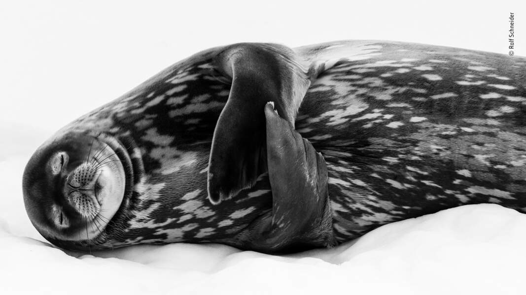 Dormir comme un phoque