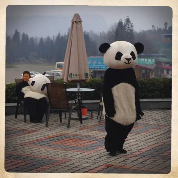 Faux panda