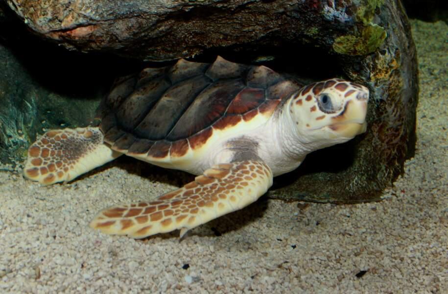 La baie des tortues