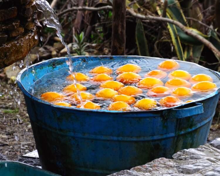 Baignade d'oranges