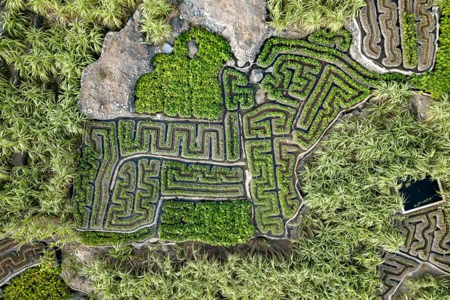 Cultures tropicales ou jardins à la française?