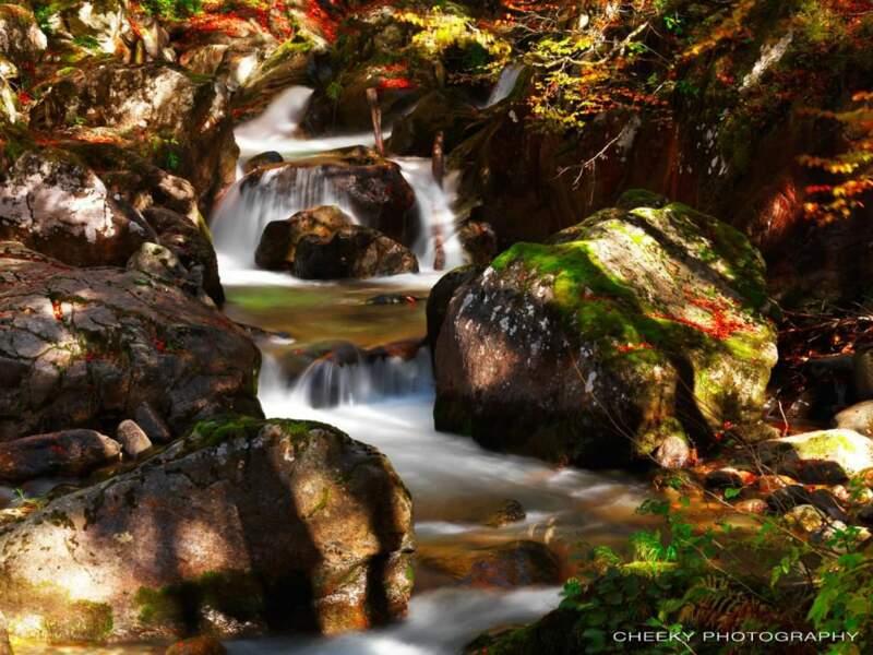 Une rivière des Pyrénées