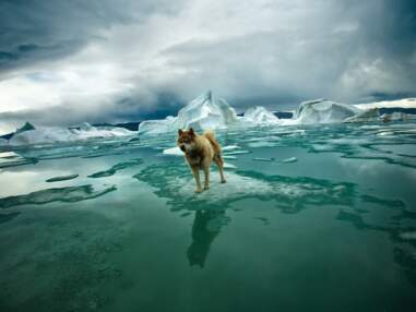 Du pôle Nord au pôle Sud : banquise en péril, attention fragile