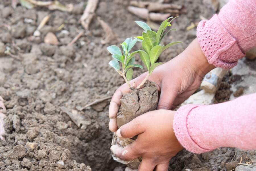 Des centaines de millions d'arbres plantés