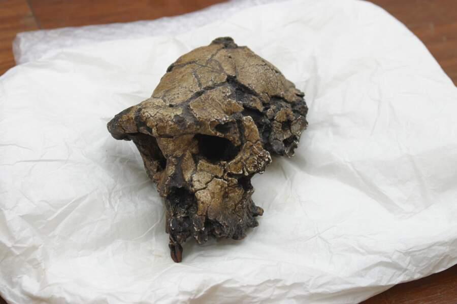2001 – Mise au jour du crâne de Toumaï, vieux de 7 millions d'années