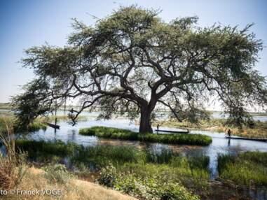 Zambèze: voyage au cœur de l'Afrique sauvage