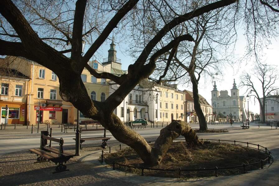 Pologne : à terre, mais pas abattu