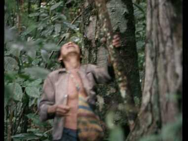 Amazonie : comment pensent les forêts