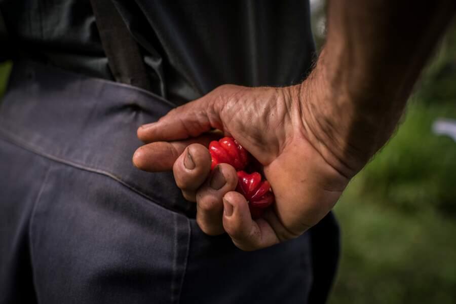 Des agriculteurs hors pair