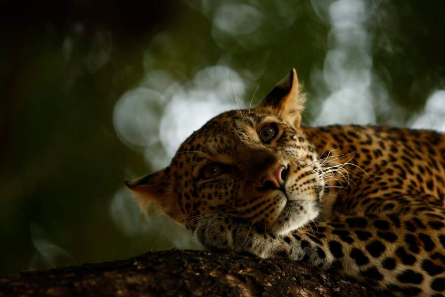 """Belle au bois dormant - Skye Meaker (Afrique du Sud), vainqueur dans la catégorie """"jeune photographe animalier"""""""