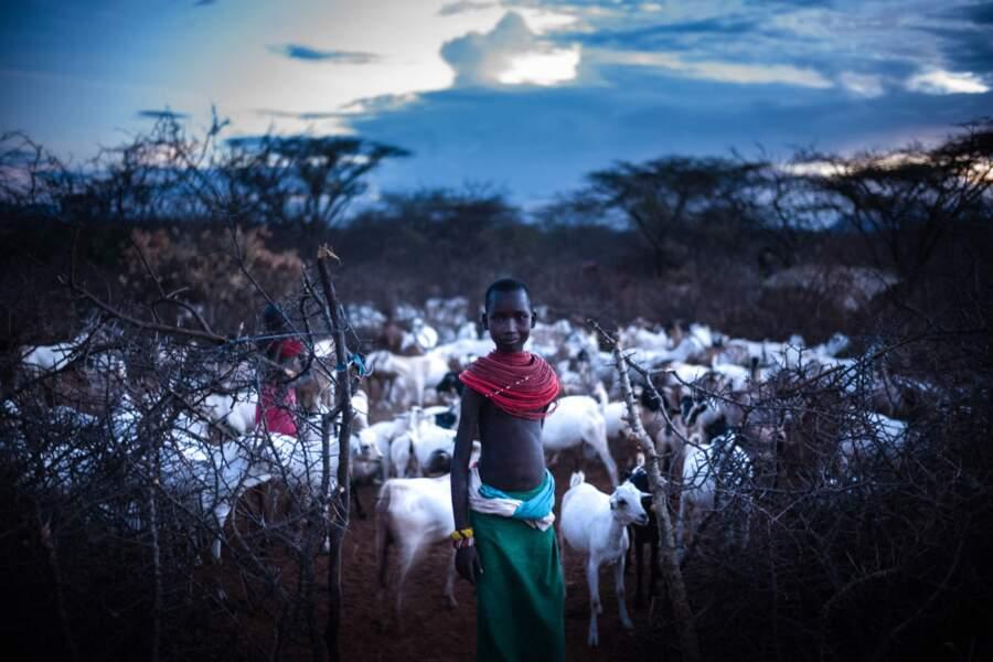 Protéger le bétail