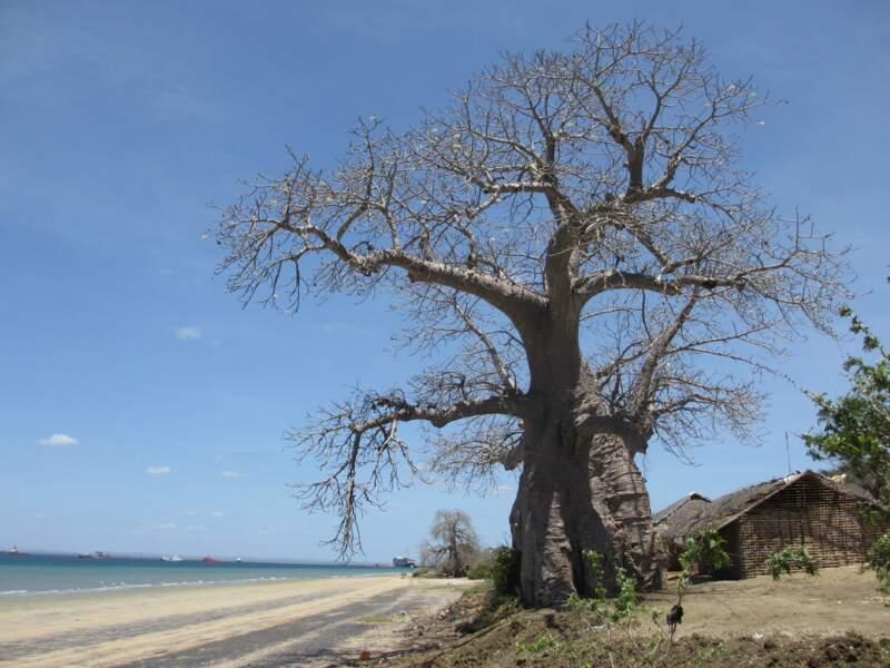 Baie de Pemba, Mozambique