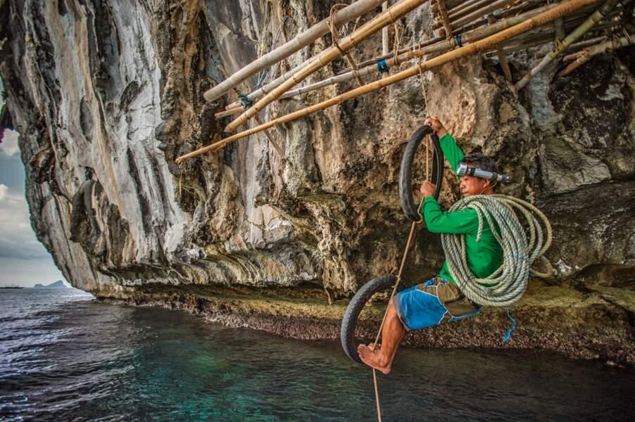 La chasse aux nids de salanganes, une activité traditionnelle
