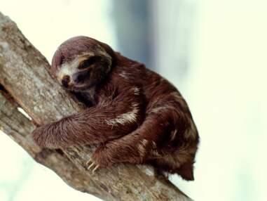 Animaux : le top 5 des gros dormeurs
