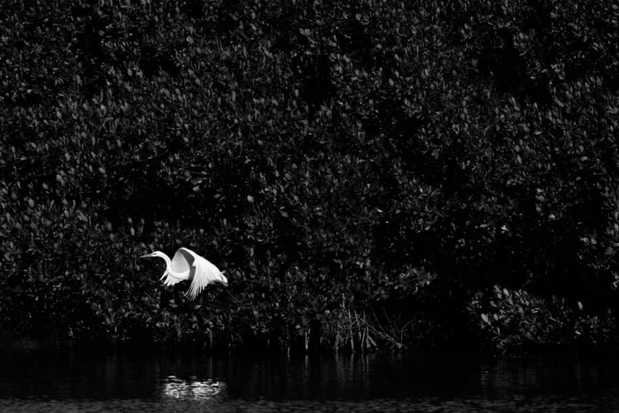 La mangrove la plus vaste d'Amérique du Nord