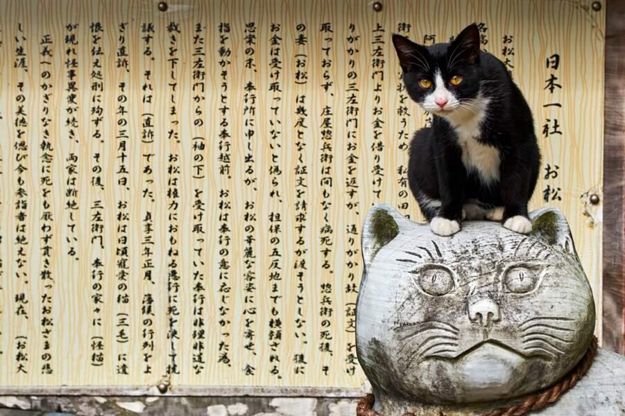 A Tokyo, un temple dédié aux chats