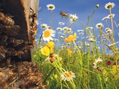 Le génie des abeilles exposé au Havre
