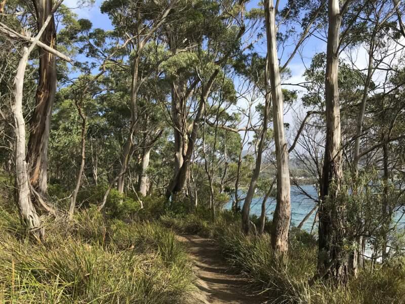 Faire une virée enchantée à Bruny Island