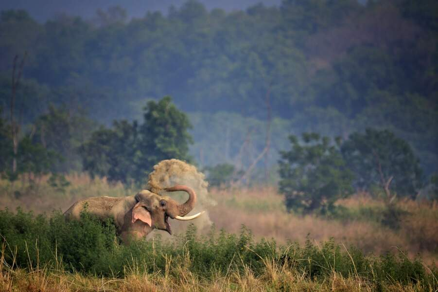 Elephant d'Asie, parc national Jim Corbett, Inde
