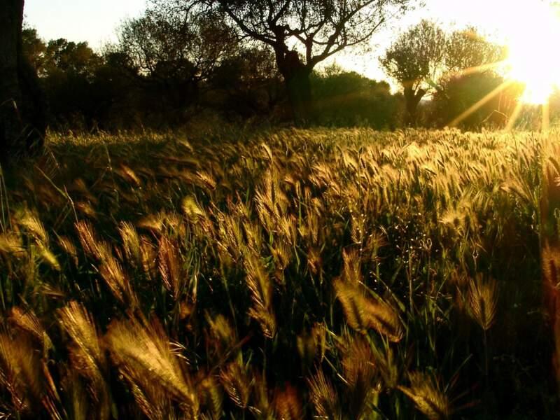 Diaporama n°14 : La Provence au fil des saisons