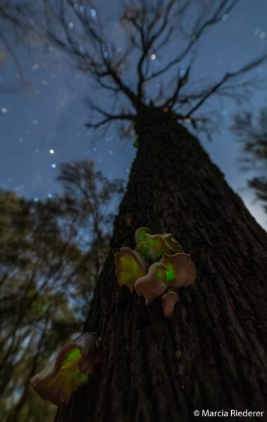 Le fantôme de la forêt