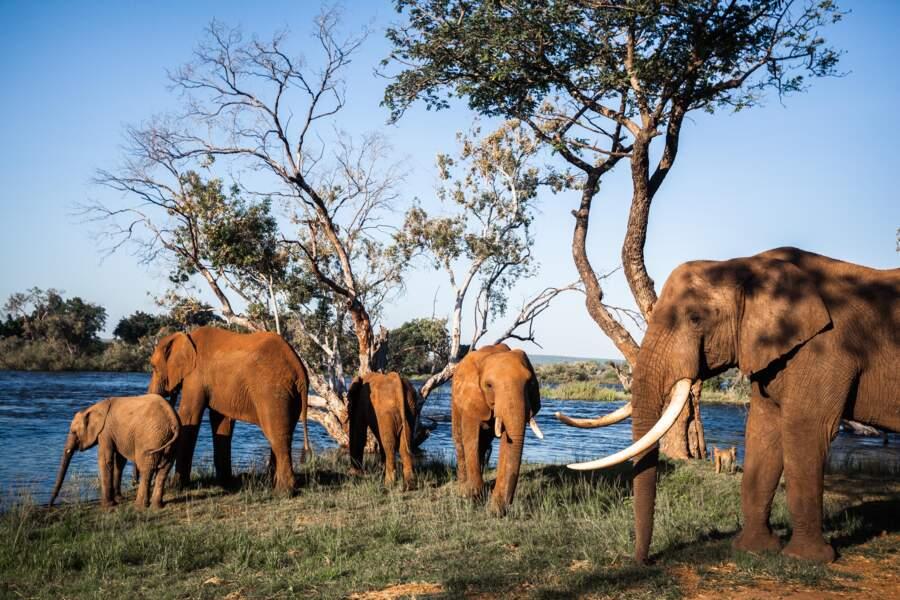 L'Elephant Cafe, un restaurant sur pilotis au bord du fleuve