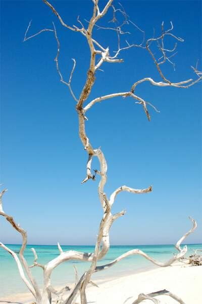 Plage de Cayo Jutias, Cuba, par Isabelle Chauvel / Communauté GEO