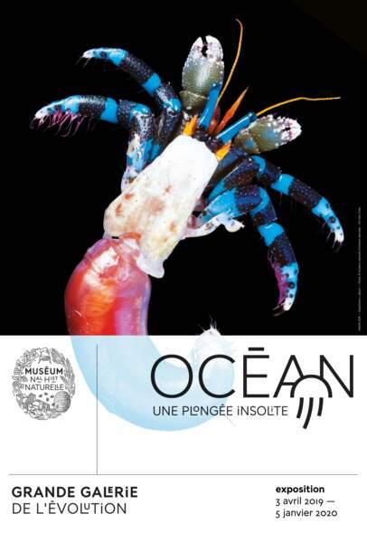 Océan, une plongée insolite à vivre au Muséum national d'histoire naturelle