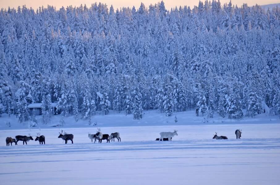 Hiver en Laponie sur le lac Ounas, en Finlande, par Pascal Gaudry/ Communauté GEO